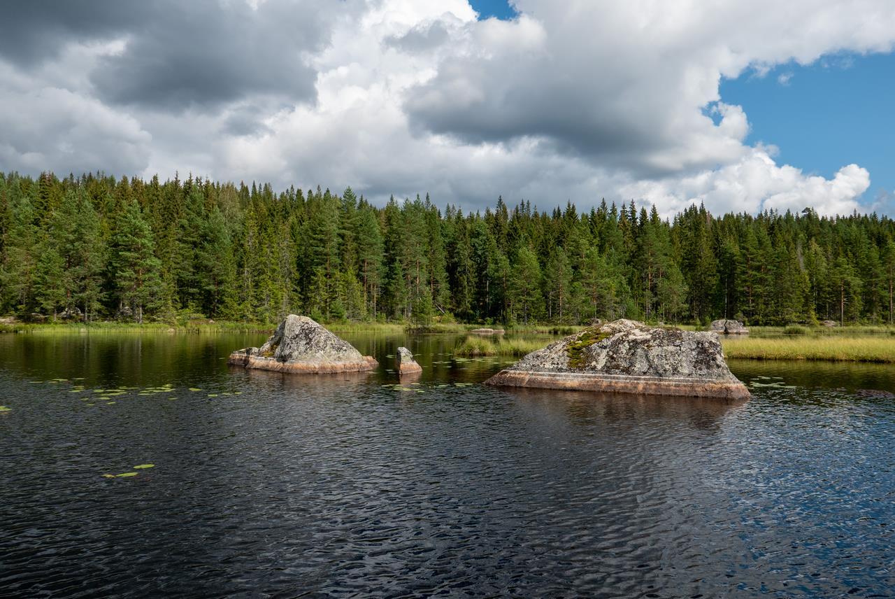 Dit zijn de stukjes Zweedse natuur die ik echt prachtig vind, de grens van water en land (Bas Wetter)