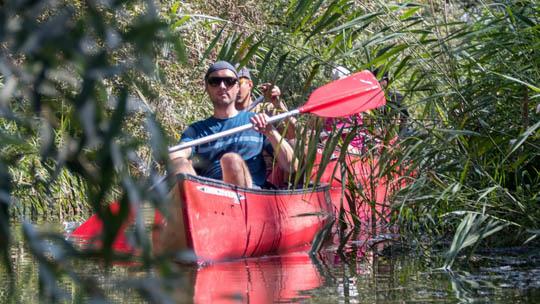 Kanoën door de kronkels van de kreken in de Biesbosch (Bas Wetter)